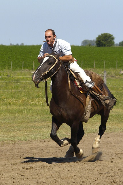 Chumleigh's Riding Adventure